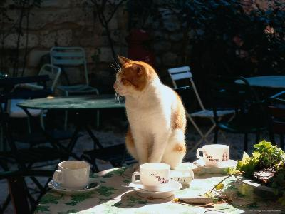 Cat on Table at a Cafe, Paris, FR-Ken Glaser-Photographic Print