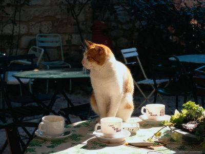 https://imgc.artprintimages.com/img/print/cat-on-table-at-a-cafe-paris-fr_u-l-p4vvwa0.jpg?p=0