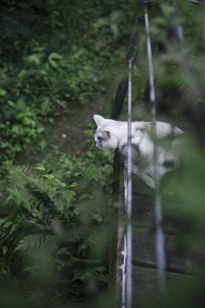 https://imgc.artprintimages.com/img/print/cat-on-terrace_u-l-q1exkxb0.jpg?p=0