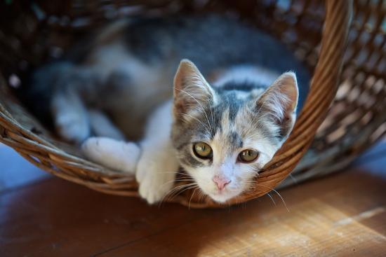 Cat Pretty-Alexey U-Photographic Print