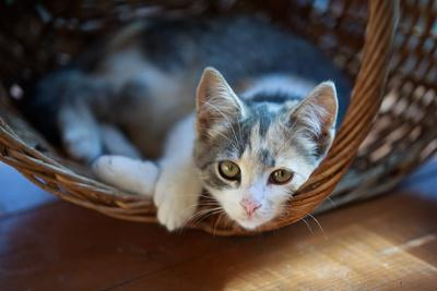 https://imgc.artprintimages.com/img/print/cat-pretty_u-l-q1a32yz0.jpg?p=0