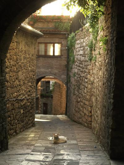 Cat Resting in the Middle of a Cobblestone Street in Gubbio, Italy-xPacifica-Photographic Print