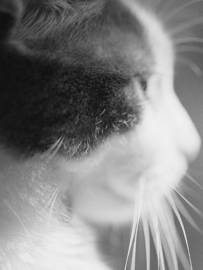 Cat's Head-Henry Horenstein-Photographic Print