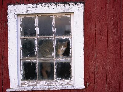 Cat sitting in a barn window-Scott Barrow-Photographic Print