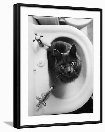 Cat Sitting In Bathroom Sink-Natalie Fobes-Framed Photographic Print