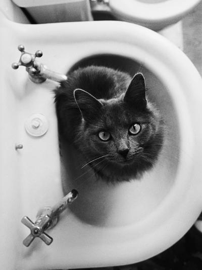 Cat Sitting In Bathroom Sink-Natalie Fobes-Photographic Print