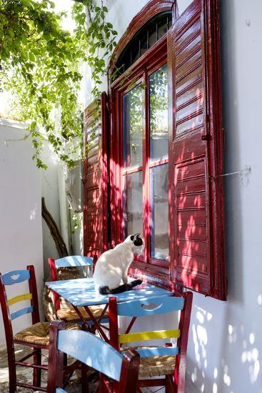 Cat Sitting on the Table Looking Inside a Cafe Window-Krista Rossow-Photographic Print