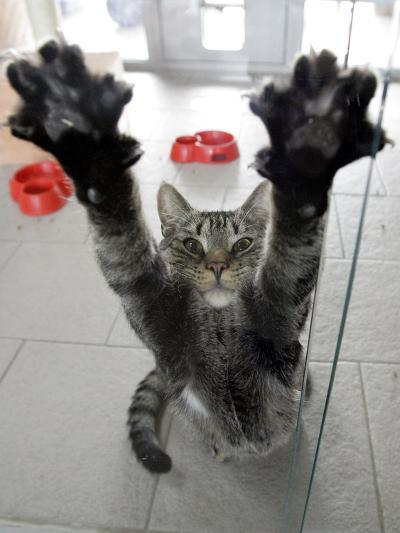Cat Stretches on a Glass Door in the Animal Shelter in Berlin--Photographic Print