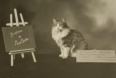 Cat Study Number 6--Photographic Print