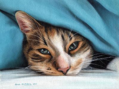 Cat under Blacket-Sarah Stribbling-Art Print