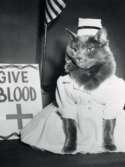 Cat Wearing Nurse Uniform--Photographic Print