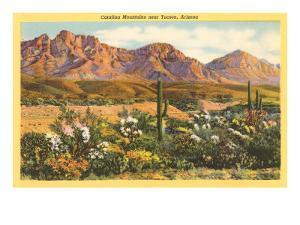 Catalina Mountains, Tucson, Arizona