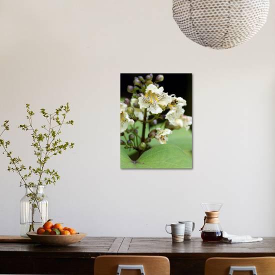 Catalpa bungei indian bean tree close up of white flowers with catalpa bungei indian bean tree close up of white flowers with spotsby susie mccaffrey mightylinksfo
