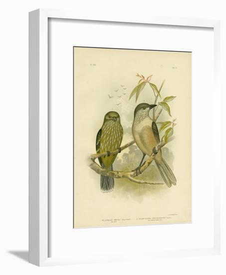 Catbird, 1891-Gracius Broinowski-Framed Premium Giclee Print