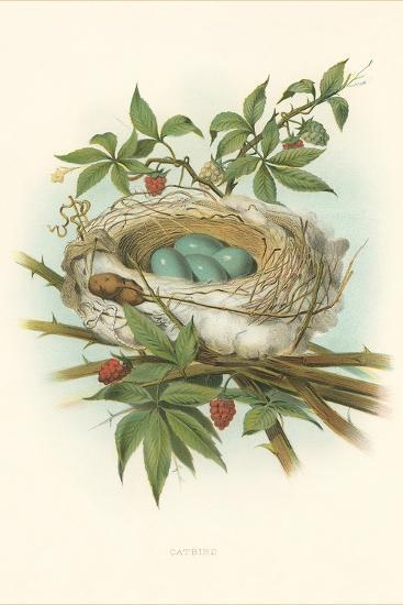 Catbird Nest and Eggs--Art Print