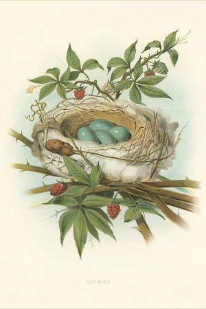 https://imgc.artprintimages.com/img/print/catbird-nest-and-eggs_u-l-podopq0.jpg?p=0