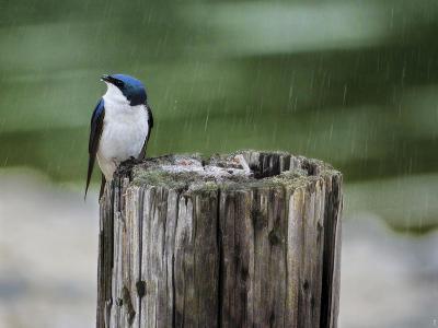 Catching Raindrops-Jai Johnson-Giclee Print