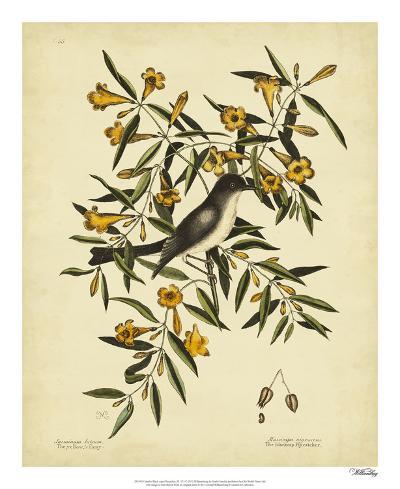 Cates. Black-capt Flycatch. Pl. T53-Mark Catesby-Giclee Print
