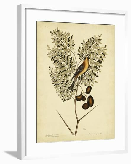 Catesby American Goldfinch, Pl. T43-Mark Catesby-Framed Art Print