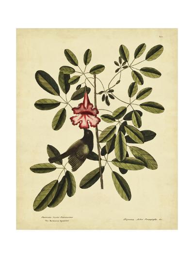 Catesby Bahama Sparrow, Pl. T37-Mark Catesby-Art Print