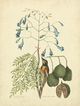 https://imgc.artprintimages.com/img/print/catesby-bird-botanical-ii_u-l-pfrsy70.jpg?p=0