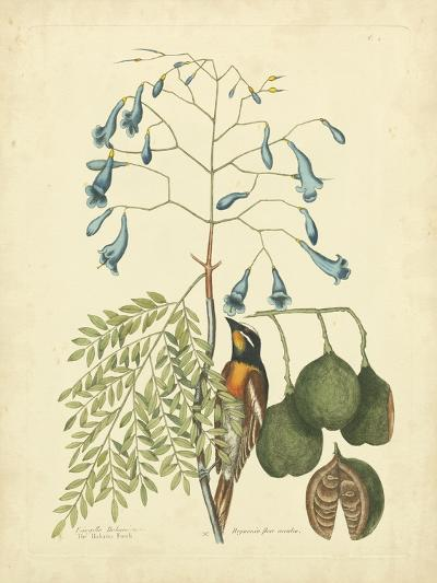 Catesby Bird & Botanical II-Mark Catesby-Art Print