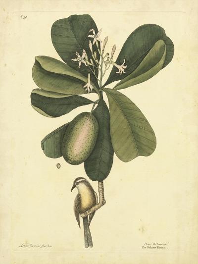 Catesby Bird & Botanical III-Mark Catesby-Art Print