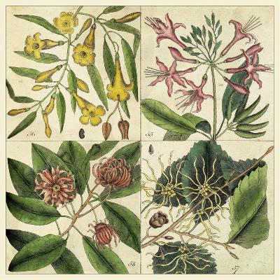 Catesby Botanical Quadrant I-Mark Catesby-Art Print
