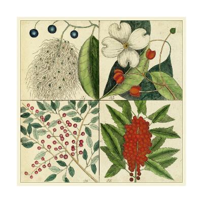Catesby Botanical Quadrant II-Mark Catesby-Art Print