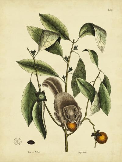 Catesby Flying Squirrel, P. T76-Mark Catesby-Art Print