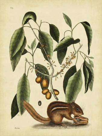 https://imgc.artprintimages.com/img/print/catesby-ground-squirrel-pl-t75_u-l-q1bfjte0.jpg?p=0