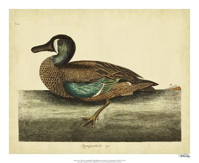 Catesby White-face Teal, Pl. T100-Mark Catesby-Giclee Print