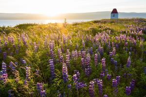 Iceland, Budardalur by Catharina Lux