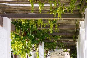 Porch with Hanging Bunches of Grapes by Catharina Lux
