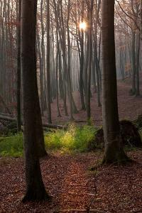 The Baltic Sea, National Park Jasmund, Autumn Forest by Catharina Lux