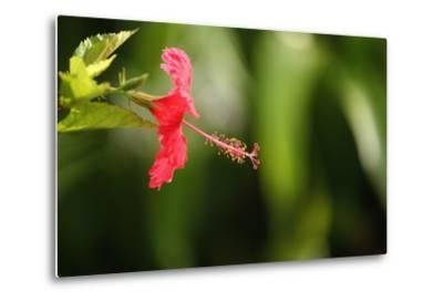 The Seychelles, La Digue, Hibiscus, Red Blossom