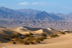 USA, Death Valley National Park, Mesquite Flat Sand Dunes by Catharina Lux