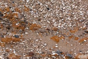 Usedom, Baltic Sea Beach, Escarpment with Sediment Layers by Catharina Lux
