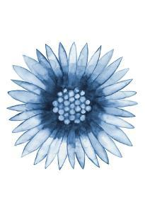 Blue Daisy by Cathe Hendrick