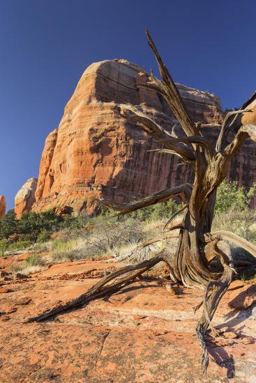 Cathedral Rock, Sedona, Arizona, Usa-Rainer Mirau-Photographic Print