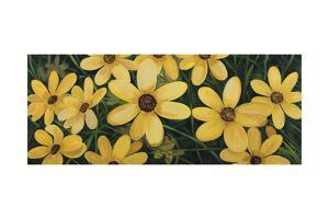 Coreopsis by Catherine Breer