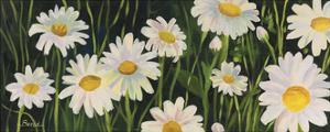 Daisies by Catherine Breer