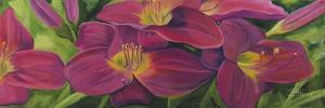 Daylilies by Catherine Breer