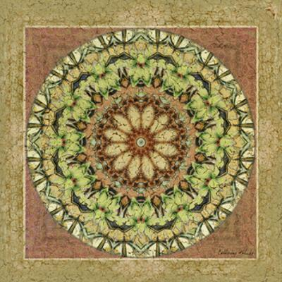 Floress Mandala IV by Catherine Kohnke