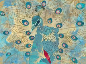 Graphic Peacock I by Catherine Kohnke