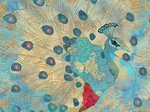Graphic Peacock II by Catherine Kohnke