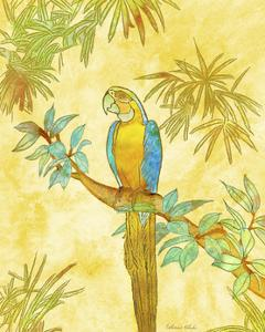 Macaw on Branch I by Catherine Kohnke