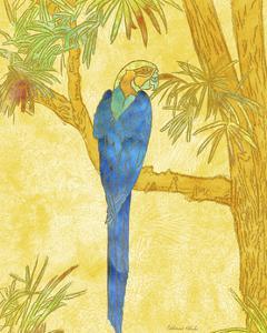 Macaw on Branch II by Catherine Kohnke