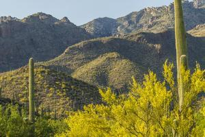 Arizona, Coronado NF. Saguaro Cactus and Blooming Palo Verde Trees by Cathy & Gordon Illg