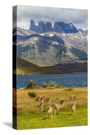 Chile, Patagonia, Torres del Paine NP. Mountains and Guanacos